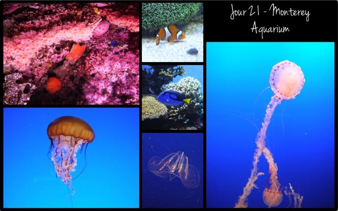 2013 - OA - J21 - Aquarium